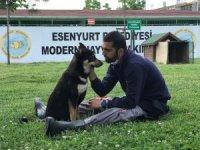 Trafik kazasında engelli kalan köpek yürüteç ile yeniden hayata tutundu