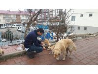 Tufanbeyli'de sokak hayvanları için seferberlik