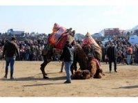 Manisa'da 6. Deve Güreşleri Festivali renkli görüntülere sahne oldu