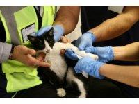 Ayağı kırık acile sığınan kediye hasta çalışanları sahip çıktı