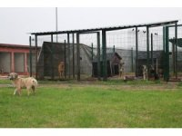 Sakarya Büyükşehir Hayvan barınağında hastane ve otel kurulacak
