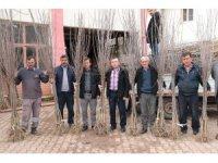 Akhisar'da artık kiraz da yetişecek