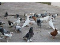 Söke'de güvercin hırsızı jandarmadan kaçamadı