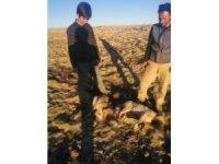 Yavru köpekler tüfekle öldürüldü