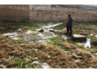 Viranşehir'de larva ile mücadele
