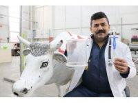 Sivas'ta bir veteriner hekim, ineklerin karında gaz ve sıvı birikimini ortadan kaldıran ürün geliştirdi