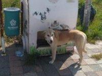 Süleymanpaşa'da sokak hayvanları için mama ve su desteği