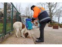 Akçakoca'da sokak hayvanları unutulmadı