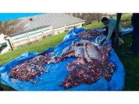 Şemdinli'de 4 büyükbaş hayvan belaların def edilmesi için kesildi