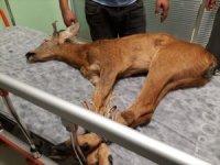 Ordu'da tedavi edilen yaralı hayvan sayısı artıyor