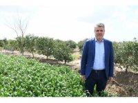 """Barut: """"Çiftçi üretmezse gıda fiyatları uçar"""""""