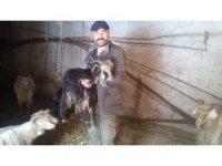 Siirt'te kar yağışı hayvan sahiplerini vurdu