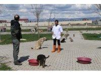 DKMP Muş Şubesi tarafından hayvan barınakları denetlendi