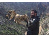 Şırnak'ta tedavi edilen şahinler doğaya bırakıldı
