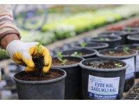 Aydınlılar korona günlerinde evde 'ata tohumlarını' üretiyor