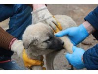 Evinden çıkamayan yaşlı vatandaşın yaralı köpeğini belediye tedavi ettirdi