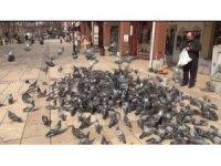 Vatandaş evden çıkamayınca güvercinler aç kaldı