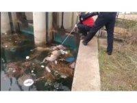 Kanaldaki köpek boğulan arkadaşını kurtarmaya çalıştı