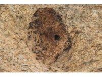 Latmos'un sıvacısı 'Çömlekçi' kuşu örnek alınsın