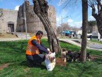 Büyükşehir Belediyesi korona mağduru sokak hayvanlarını unutmadı