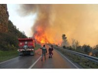 Orman yangınında 800 arı kovanı kül olan teyze gözyaşlarına boğuldu