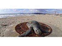Kuşadası'nda 1 ayda 8 deniz kaplumbağası ölü olarak bulundu