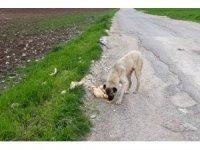 Fahri av müfettişi sokak hayvanlarını unutmadı
