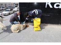 Erzincan'da sokak hayvanları unutulmadı