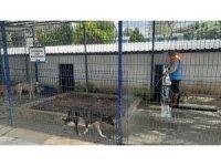 Kuşadası'nda hayvan bakım ve rehabilitasyon merkezi dezenfekte edildi