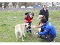 Elazığ'da sokak hayvanları unutulmadı