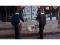 Polisler sokak hayvanlarını elleriyle besledi
