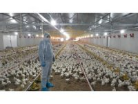 Kocaeli'de korona virüs tarım ve hayvancılıkta üretimi etkilemedi