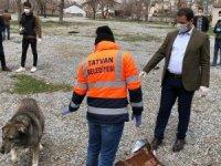 Tatvan'da sokak hayvanları için doğaya yiyecek bırakıldı