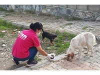 Sokak hayvanlarına günlük mama servisi yapılıyor