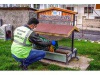 Nevşehir Belediyesi sokak hayvanlarını aç bırakmıyor