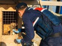 Polis ve Jandarma sokak hayvanları için seferber oldu