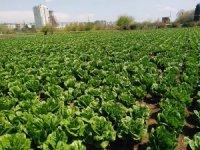 ÇKS belgeli Kilisli çiftçiler arazilerine gidebilecek