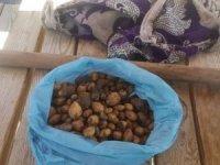 50 kilo topladılar, 307 bin lira ceza yediler