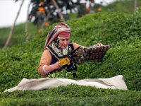 İçişleri Bakanlığı çay üreticileri için genelge yayınladı
