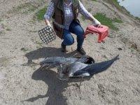 Köyde bulunan gri balıkçıl kuşu yetkililere teslim edildi