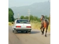 Otomobile bağladıkları atı metrelerce koşturdular