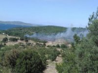 İzmir'deki yangınlar kontrol altında