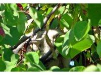 5 metre yükseklikteki bir ağaçta mahsur kalan yavru kedi, itfaiye tarafından kurtarıldı