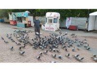 Yiyecek bulmakta güçlük çeken güvercinleri muhabirler yemledi