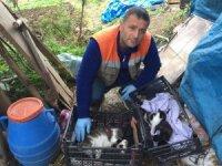 Kedinin Yardımına Akçaabat Belediyesi Koştu