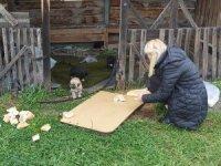 Arpaçay Belediyesi bayramda sokak hayvanlarını unutmadı