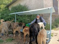Ramazan Bayramı'nda sokak hayvanları unutulmadı