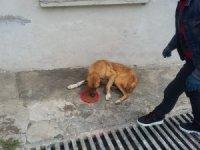 Pütürge'de sokak hayvanları unutulmadı