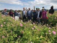 Isparta'da gül hasadı bayramda da devam ediyor
