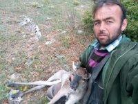 Çobanın bulduğu yaralı geyik tedavi edildi